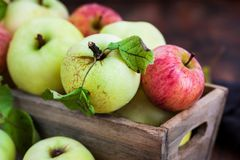 Fresh ripe colorful apples in wooden box on rustic background royalty free stock image