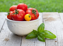 Fresh ripe colorful tomatoes in bowl Royalty Free Stock Images