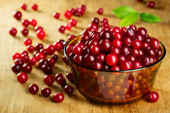 Fresh ripe cranberries Stock Image