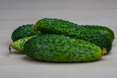Fresh ripe cucumbers Royalty Free Stock Images