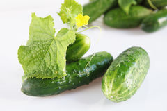 Fresh ripe cucumbers Stock Photos
