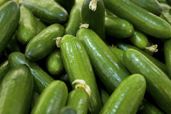 Fresh, ripe cucumbers Royalty Free Stock Images