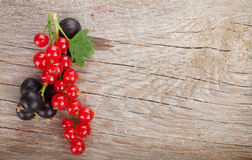 Fresh ripe currant berries Royalty Free Stock Images
