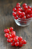 Fresh ripe currant Royalty Free Stock Images