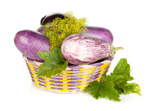 Fresh ripe eggplants in basket Royalty Free Stock Images