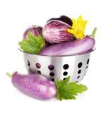 Fresh ripe eggplants in colander Royalty Free Stock Photos