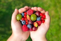 Friuts in the palm of a child. Fresh, ripe friuts in the palm of a child stock photos