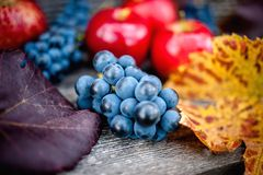 Fresh ripe grapes at autumn harvest Stock Photos