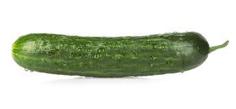 Fresh ripe green cucumber isolated on white background. Royalty Free Stock Image