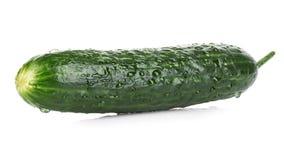 Fresh ripe green cucumber . Stock Images