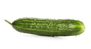 Fresh ripe green cucumber . Royalty Free Stock Image
