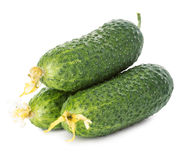 Fresh ripe green cucumbers isolated on white background Stock Image