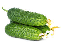 Fresh ripe green cucumbers isolated on white background Stock Photos