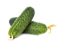 Fresh ripe green cucumbers isolated on white background.  Royalty Free Stock Photos