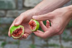 Fresh ripe green figs stock photography