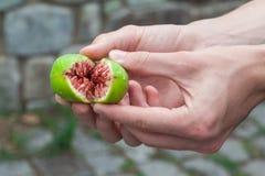 Fresh ripe green figs royalty free stock photo