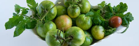 Fresh ripe green garden tomatoes in white ceramic bowl, white background. And space for text royalty free stock photo