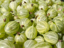 Fresh ripe green gooseberries closeup Royalty Free Stock Images