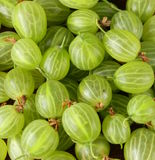Fresh ripe green gooseberries Royalty Free Stock Images