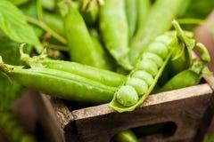 Fresh ripe green peas Stock Photos