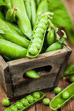 Fresh ripe green peas royalty free stock images