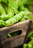 Fresh ripe green peas. In wooden box Stock Image