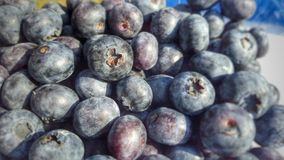 Fresh ripe healthy blueberries Royalty Free Stock Image