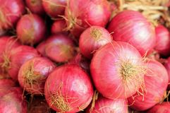 Fresh ripe heap of pink colored salad onions Royalty Free Stock Image