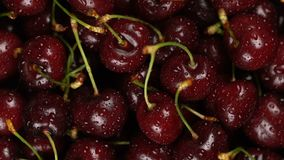 Fresh, ripe, juicy cherries background, close up berry, rotation with zoom out. Gastronomy concept, organic food. Macro red cherries fruit in plate stock video footage