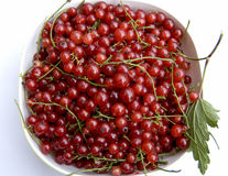 Fresh, ripe, juicy currants Stock Images