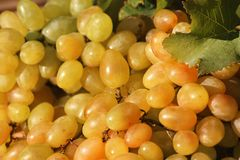 Fresh ripe juicy grapes as background. Closeup stock photography