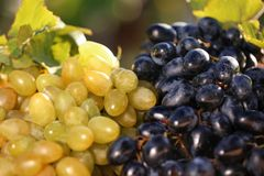 Fresh ripe juicy grapes. On blurred background stock image