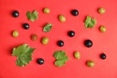 Fresh ripe juicy grapes and leaves scattered on color background. Top view royalty free stock image