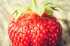 Fresh ripe juicy strawberry/fresh ripe juicy strawberry close up. Gourmet food royalty free stock photography