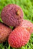 Fresh ripe lychee fruit Stock Image