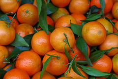 Fresh ripe mandarin oranges with green leaves Royalty Free Stock Image