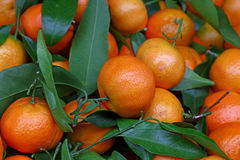 Fresh ripe mandarin oranges with green leaves Stock Images