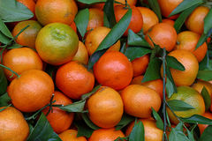 Fresh ripe mandarin oranges with green leaves Stock Photography