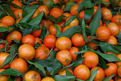 Fresh ripe mandarin oranges with green leaves Royalty Free Stock Images