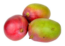 Fresh Ripe Mangoes Stock Photos