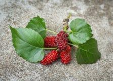 Fresh ripe mulberry berries Stock Photography