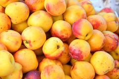 Fresh and ripe nectarines Royalty Free Stock Image