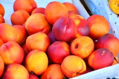 Fresh and ripe nectarines Stock Images