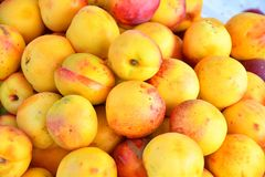 Fresh and ripe nectarines Royalty Free Stock Photo