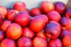 Fresh and ripe nectarines Stock Image