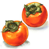 Fresh ripe orange persimmon, two fruits, isolated, watercolor illustration on white Stock Photography