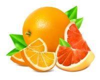 Fresh ripe oranges and grapefruits. vector illustration