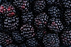 Fresh ripe organic blackberries. As a background Stock Photography