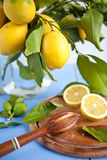 Fresh ripe organic lemons Stock Images