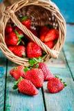 Fresh ripe organic strawberries in a basket Stock Image